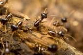 termites inspection Tacoma wa