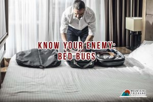 man-packing-his-stuffs-inside-his-bag-bed bugs